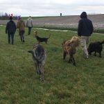 Mâtin espagnol, Berger portugais, Labrador retriever, Berger allemand et Beagle