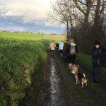 Beagle et Bull-terrier sur un chemin de campagne
