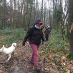 Berger Blanc accompagnant la balade canine