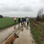 Malinois fermant la marche pluvieuse