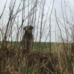 Petit chien caché derrière les fourrés