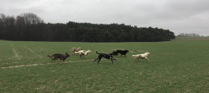 Les photos de notre première balade canine de ce samedi 20 janvier