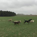 Jeu de course canin