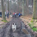 Border-collie se baladant avec une multitude d'autres chiens