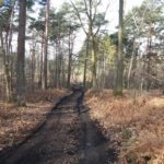 Joli chemin de forêt