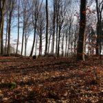 Berger blanc dans un beau paysage boisé
