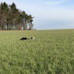 Bergers cachés par les hautes herbes