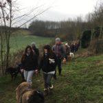Berger Portugais en promenade avec d'autres chiens