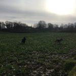 Galopades dans la campagne