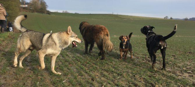 Notre première balade canine du 17.02.18