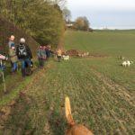 Randonnée canine dans les vastes étendues