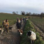 Promeneurs accompagnés de leur chiens
