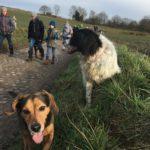 Beagle et Border collie scrutant les alentours