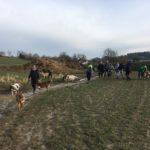 Malinois, Border collie et Berger australien trottinant dans la boue