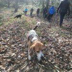 Petit Beagle en exploration