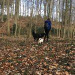 Balade canine parmi les arbustes