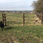 Découverte des herbages par les chiens