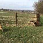 Berger australien, Beagle et Griffon attendant le reste des promeneurs