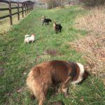 Exploration des odeurs par les chiens