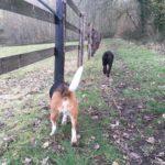 Exploration canine du chemin