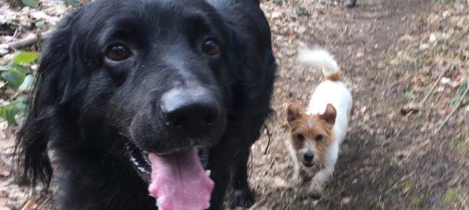 Notre deuxième balade canine du 17.02.18
