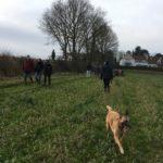 Berger Belge Malinois sillonnant les champs