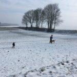 Balade canine dans la neige