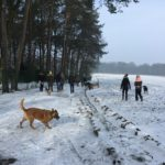 Malinois courant dans la neige