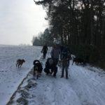 Balade canine et boules de neige