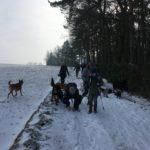 Promeneurs et leur chien en bordure de forêt