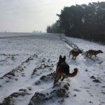 Course-poursuite dans la neige