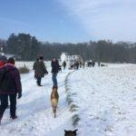 Excursion canine sur les chemins enneigés