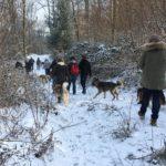 Malamute d'Alaska et Berger allemand dans les bois