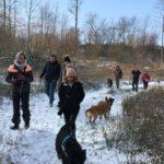 Malinois qui s'ébattent dans la neige