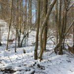 Malinois slalomant à travers les arbres