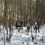 Chiens et promeneurs progressant dans les bois