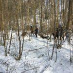 Berger allemand, Chien-loup tchèque et Mâtin espagnol sautant dans la neige