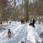 Malinois, Bouvier Bernois, Berger allemand courant à travers les bois