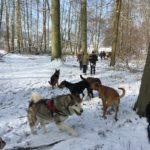 Bulldog, Malamute, Dobermann et Berger allemand