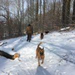 Berger belge malinois, Berger allemand et Beagle profitant de la neige