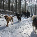 Malamute, Labrador et chien croisé en route pour s'amuser