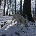 BBS explorant les étendues blanches