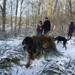 Berger portugais, la truffe pleine de neige