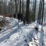 Randonnée canine dans une forêt enneignée
