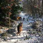 Berger allemand, Berger malinois et Beagle en vadrouille