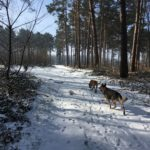 Trotting canin sur un sentier forestier enneigé