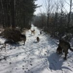 Chiens qui courent sur un long sentier forestier