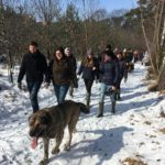 Mâtin espagnol marchant sur un chemin forestier enneigné