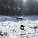 Amusement canin sur l'herbe enneigée