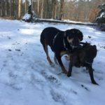 Interactions et jeux canins dans la neige